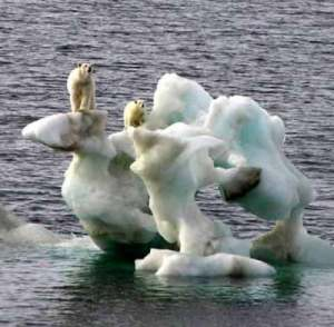 https://ghofurblog.files.wordpress.com/2011/02/polar_bears480.jpg?w=300